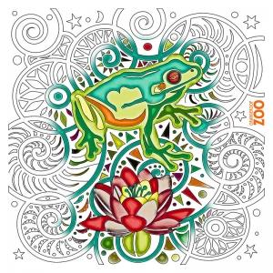 Zen Frog illustration