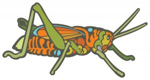 Grasshopper illustration