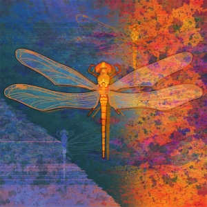 Dragonfly in fiery colors illustration
