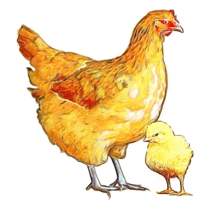 Mother Hen illustration