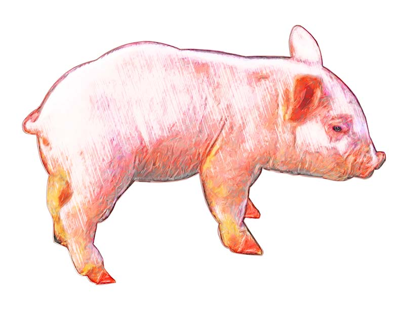 Pink Piglet illustration