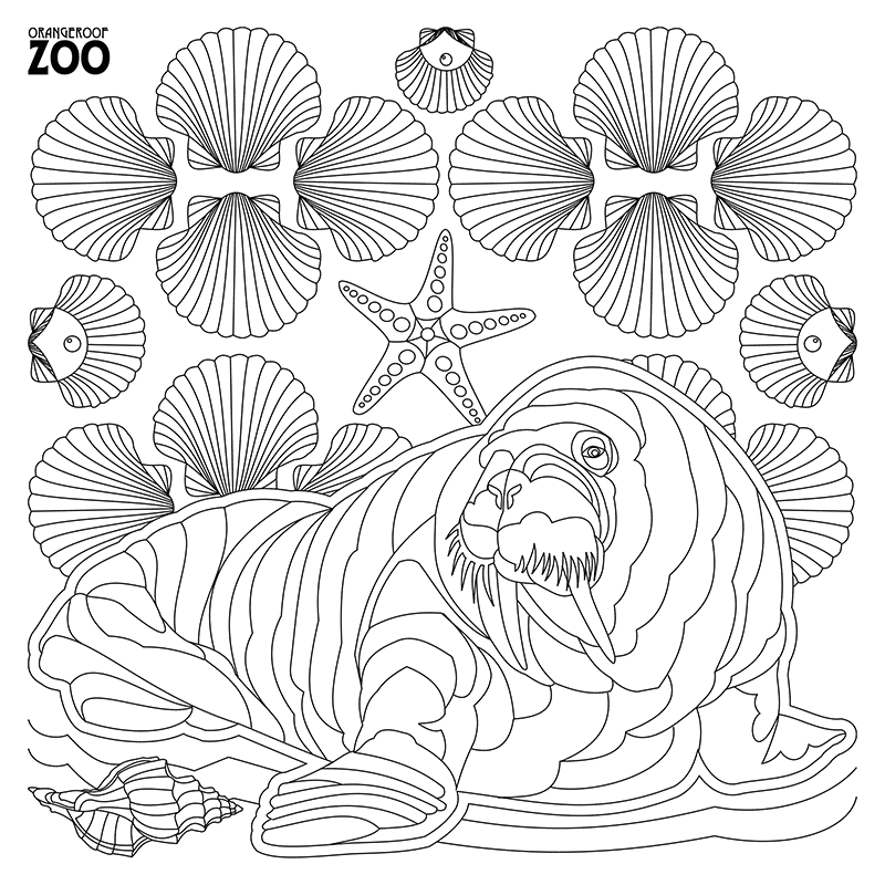 22. Coloring Book Page: Walrus