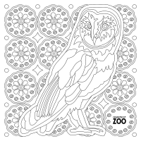 21. Coloring Book Page: Owl